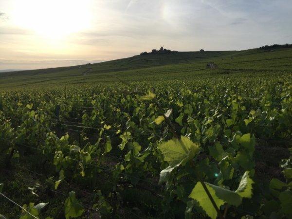 Belle journée dans les vignes