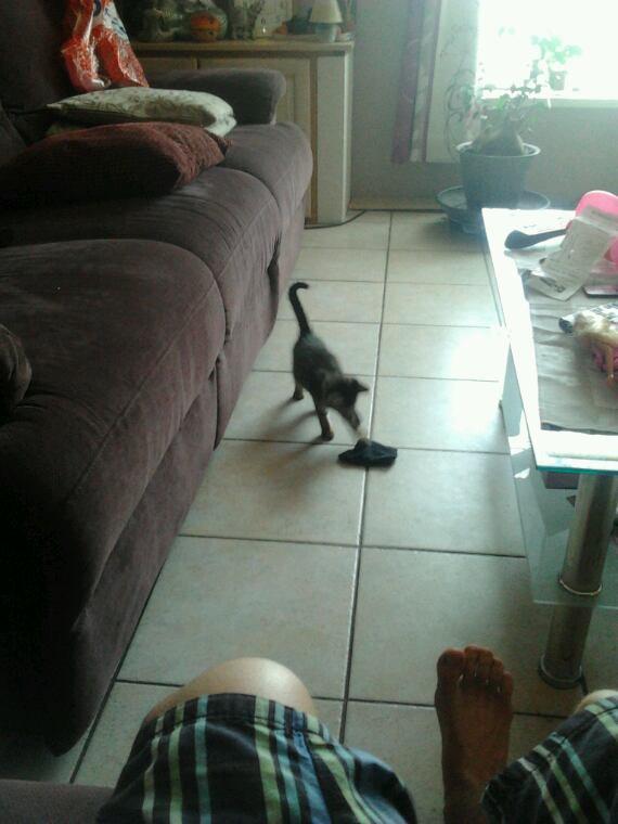 une petite chatte trouvee