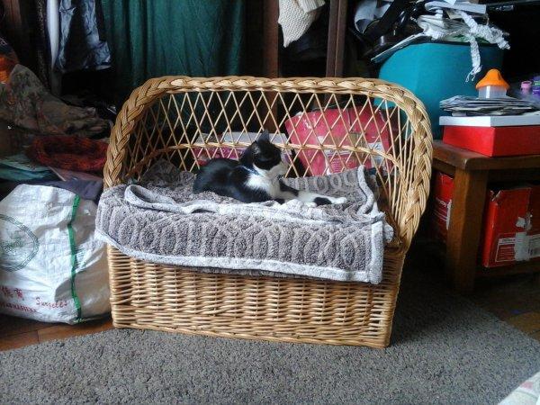 Maintenant j'ai mon propre canapé