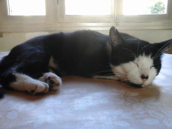 Petite sieste au frais