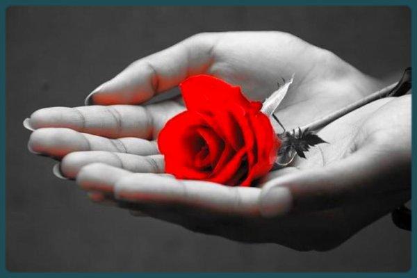 Je vous offre cette rose mais vous devez l l'offrir à votre tour elle à  besoin de cette symbiose pour donner son amour................. - ...