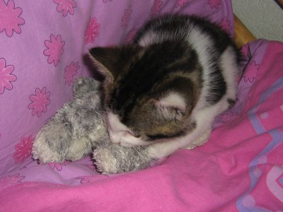 ★Mon ancien chat