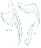 SKETCHES: Wings again
