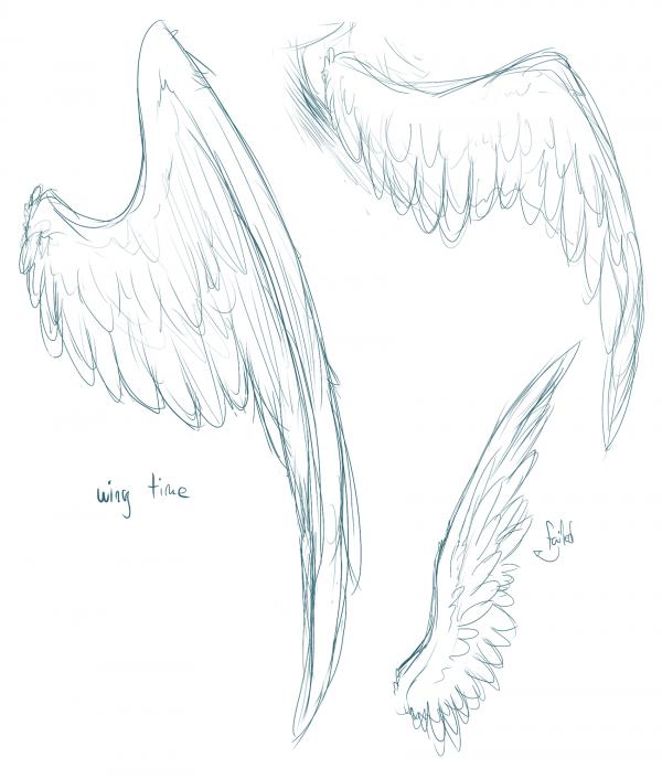 SKETCHES: Wings again
