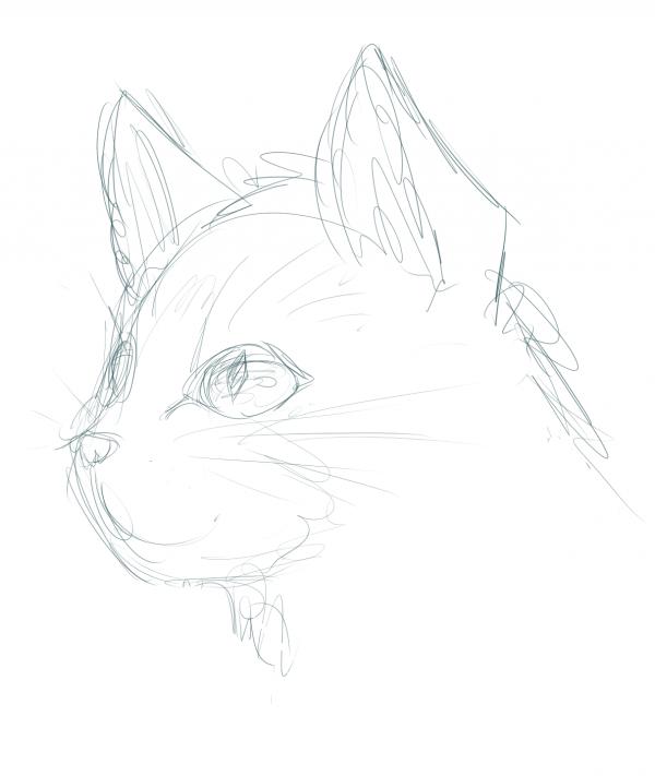 SKETCH: cat face