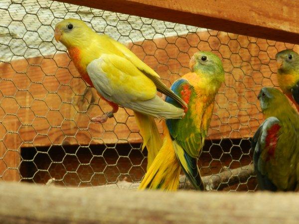 jeunes turquisines de 2014 avec leur pere