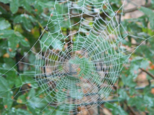 Le travail de l'araignée!!!