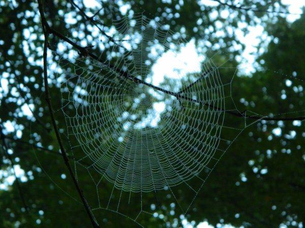 Le travail de l'araignée (2)!!!
