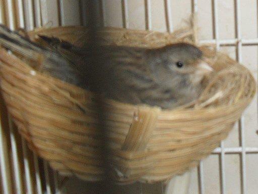 mes premiers oiseaux