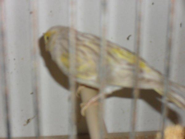 satiné mosaique jaune