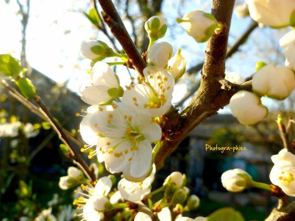 Le printemps revient.