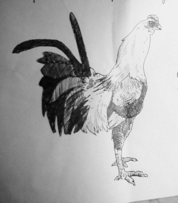 Crayon.  de. Nicolas Petit.