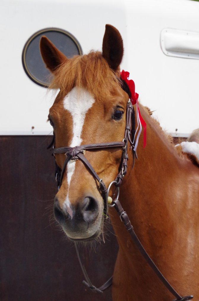 """""""Apprenez à écouter votre cheval, il a tant de choses à vous dire..."""""""