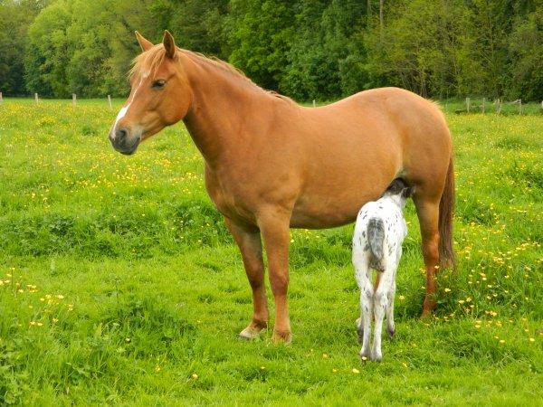 14 mai - Téquilla est devenue Maman !