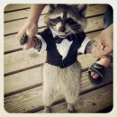 Photo de FrenchRacoon