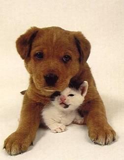 Priére étranglée d'un chien maltraité..