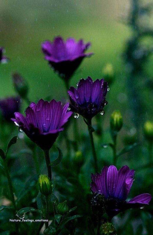 Je les aime ces petites fleurs violet archevèque :)