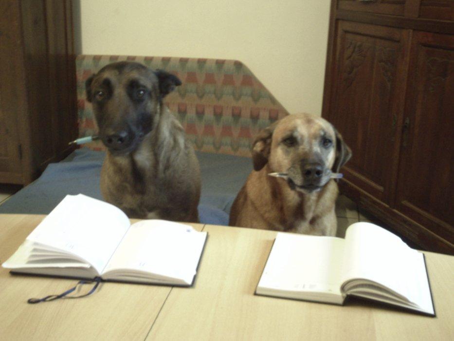 """CARSON'S SCHOOL """" coaching conseil en éducation canine """" et  """" pension canine familiale """""""