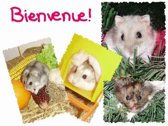 Bienvenue sur Passion-Hamster17120