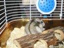Photo de passion-hamster17120