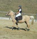 Photo de pony-materiel