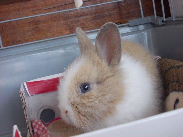 J'ai eu ma lapine !!!!!!!!!! :SOHAPPY: