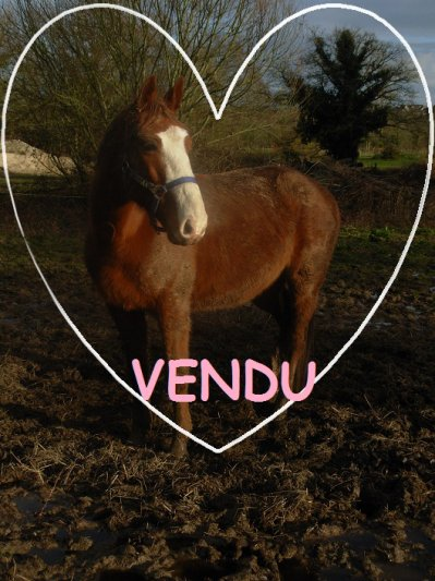 Quaholic Dors VENDU