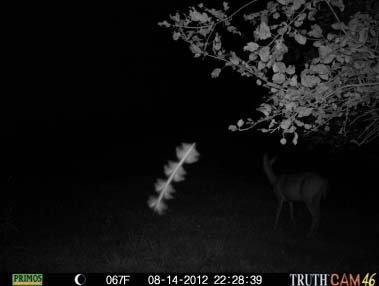 5 Photos Paranormales Expliquées Par La Science