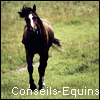 Photo de Conseils-Equins