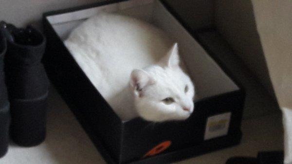 Mon chat Cristal, qui aime les boites (on sais pas pourquoi)