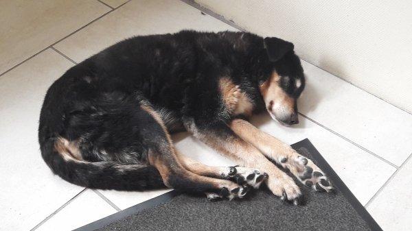 Ma chienne entrains de dormir elle est pas trop mignonne ?