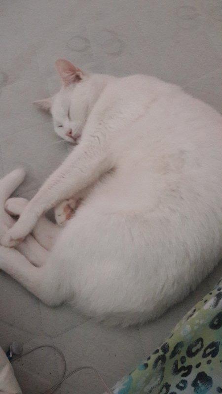 Mon chat en boule, elle est trop chou !!!