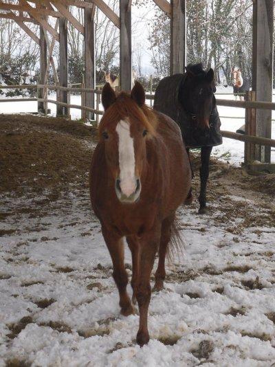 30cm de Niege au Centre equestre de la Haye !