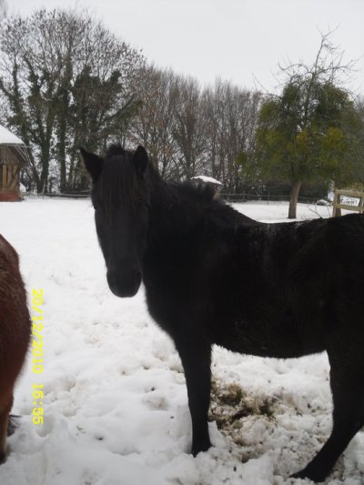 30cm de neige au Centre equestre de la Haye !