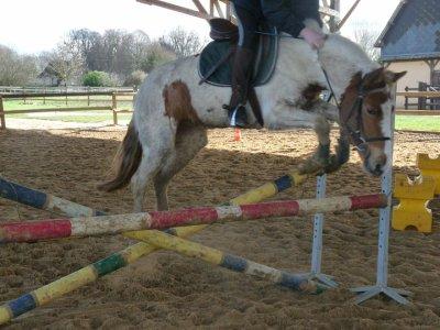Tous les nouveaux poneys en photos !