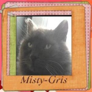 Mon chat Misty-Gris