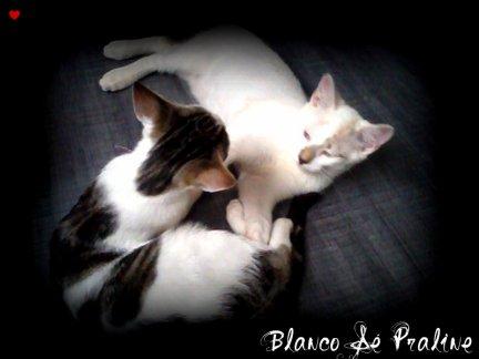 Blanco &é Praline ♥