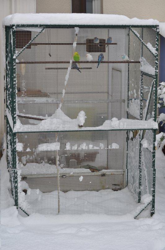 Hiver decembre 2010