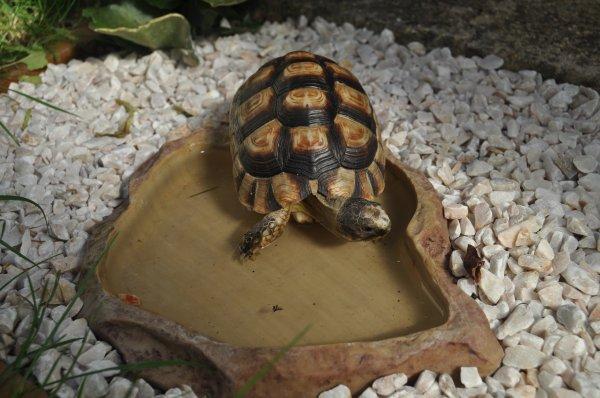 Ma tortue 10/08/2012