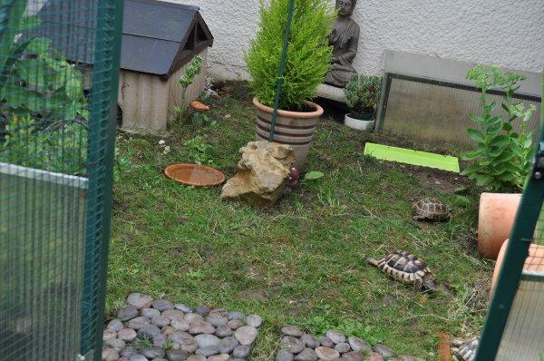 les tortue danc leur parc 20/07/2014