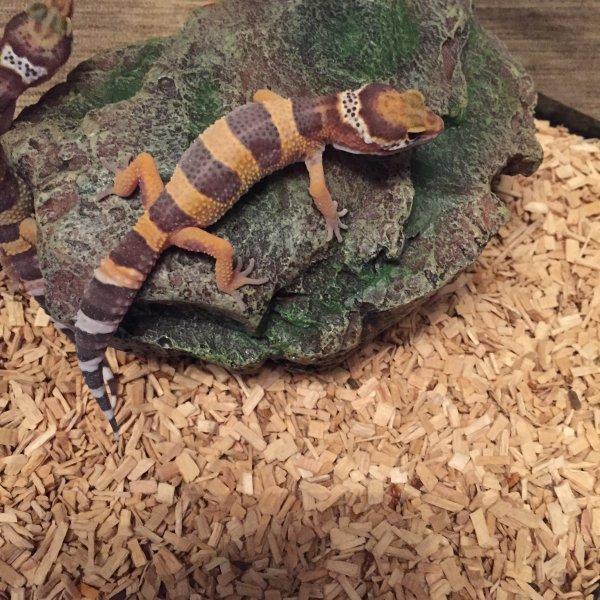 les enfants gecko
