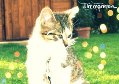 ● றon p'tit chat que j'aimais tant ❤
