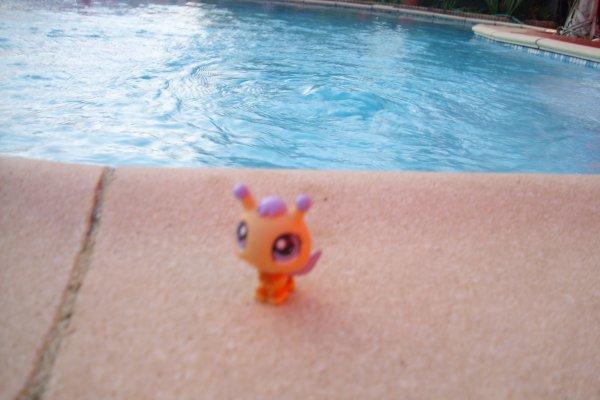 Miel Devant la piscine