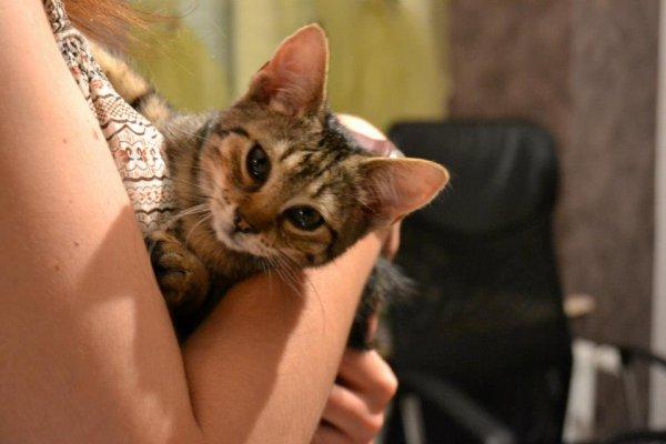 Meow. \o/