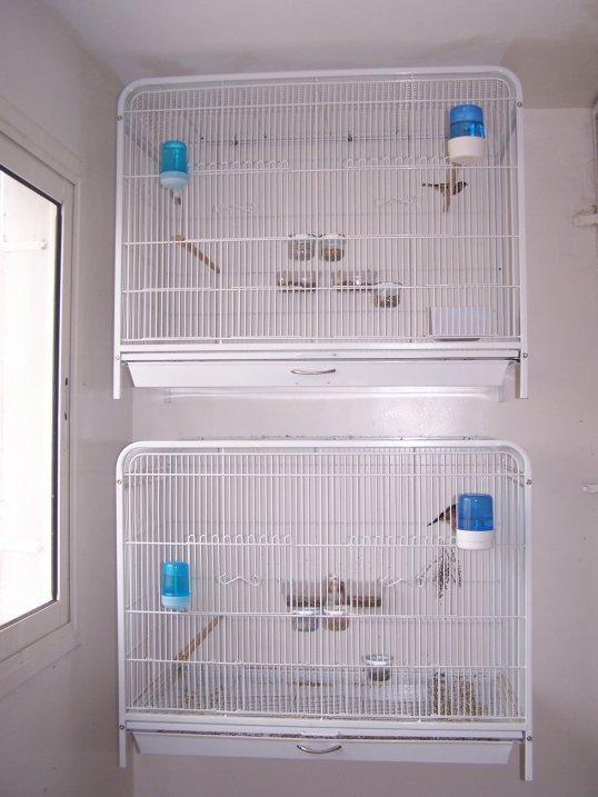 Cages pour Chardonnerets !