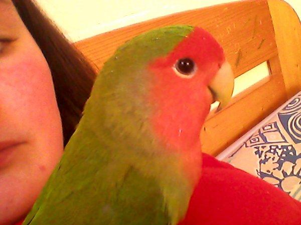 Lon ! Mon oiseaux