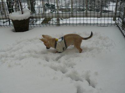 On decouvre la neige..