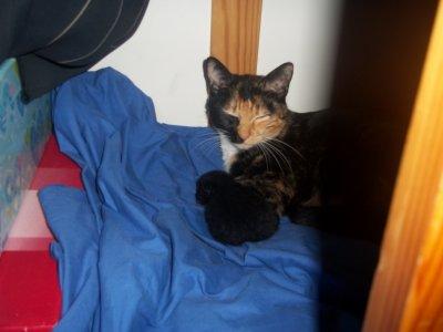 Comète & son chaton ...x)