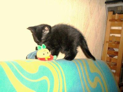 Le petit chaton ...;D