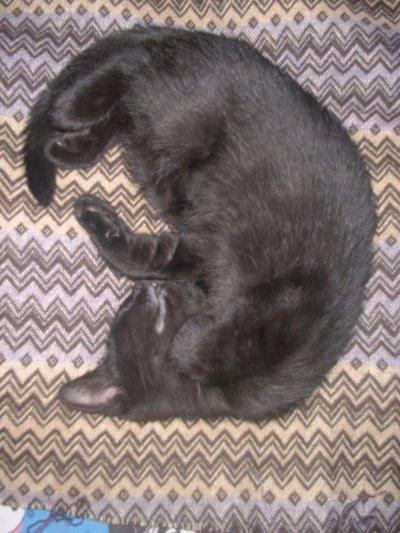 Un chaton qui dort :3...! Mignon <3?